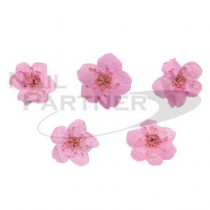 erikonail 乾燥花 粉色 ERI-134