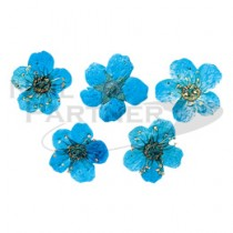 erikonail 乾燥花 藍色 ERI-137