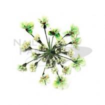 ◆Clou 乾燥花 草綠色