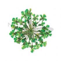 ◆Clou 乾燥花 綠色