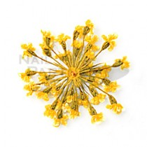 ◆Clou 乾燥花 黃色
