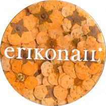 erikonail 乾燥花 橙色 ERI-157